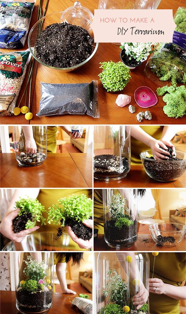 DIY Plant Terrarium Tutorial